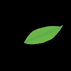 ARETE favicon laurel leaf PNG